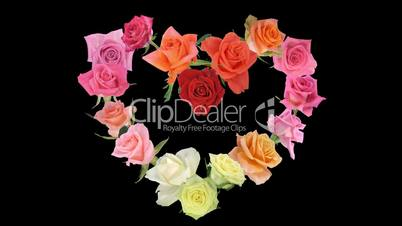 Montage of opening colorful roses time-lapse heart shape 6
