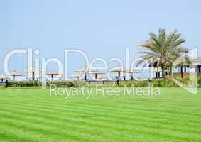 Lawn, palm and beach, UAE