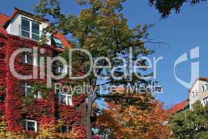 die Farbe des Herbstes II