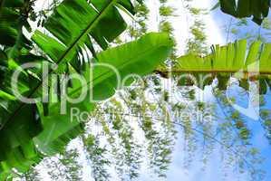 Banana And Bamboo Leaves