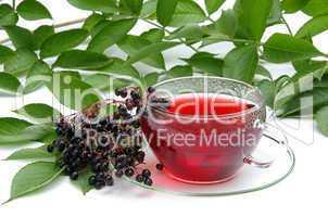 Tee Holunder - tea elder 02