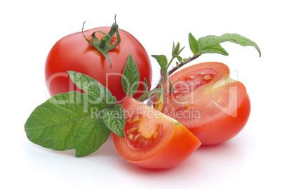 Tomate - tomato 18