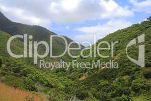 Wald auf Madeira