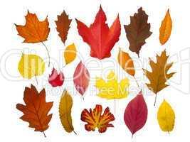 Herbstblätter freigestellt