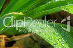 Wassertropfen auf Blatt - waterdrop on leaf 08