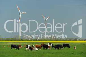 Windrad und Rinder - Wind turbine and cows 02