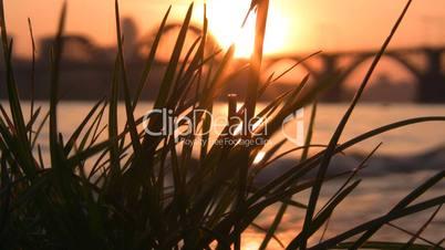 Grass against city sunset I.