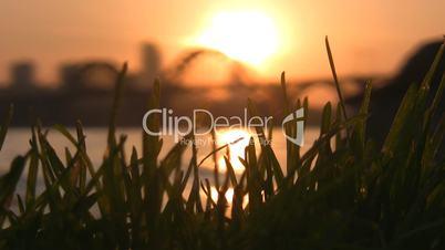 Grass against city sunset II.