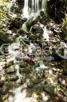 Small waterfall in Andean cloudforest