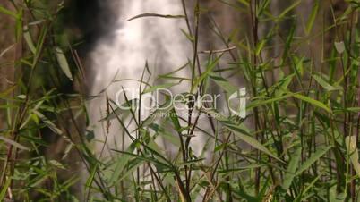 Schärfeverlagerung von Pflanzen zu Wasserfall