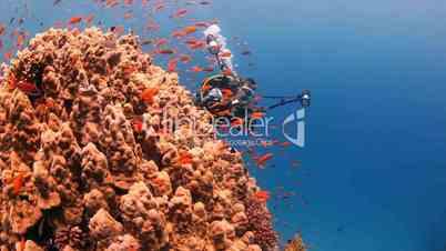 Korallen und Fischschwarm