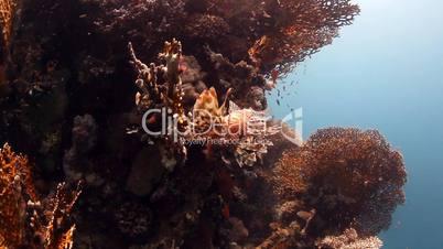 Korallenriff mit Meerestieren