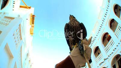 Hand hält Falken