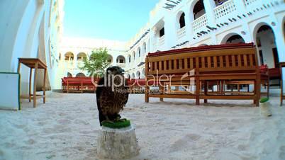 Falke vor Palast