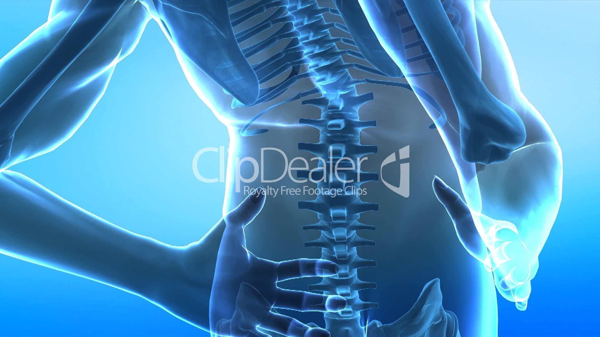 Human X Ray Spine Lizenzfreie Stock Videos Und Clips