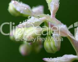 Face illusion with dew drops pm flower blossom