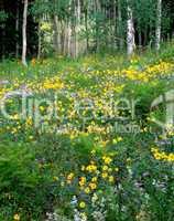 Wildflowers in a Mountain Meadow