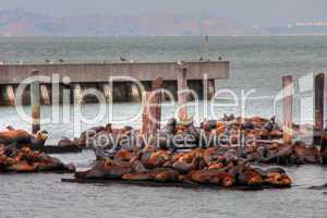 Seals in San Francisco Port, August 2003