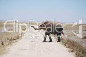 Dürrekatastrophe im Amboseli Nationalpark(Kenia)