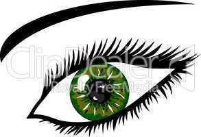 Dunkelgrünes Auge mit Wimpern