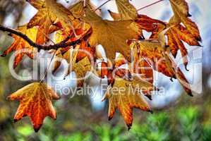 Leaves, Fall in Tuscany