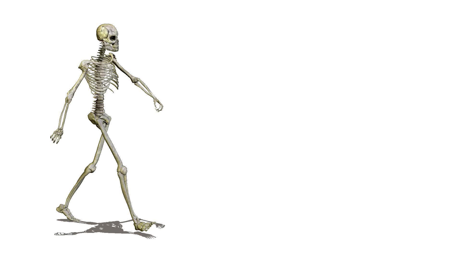 Running Skelett: Lizenzfreie Stock Videos und Clips