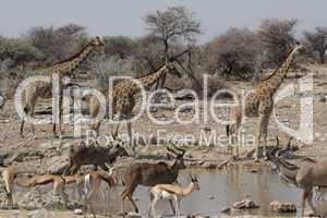 Wildlife am Wasserloch