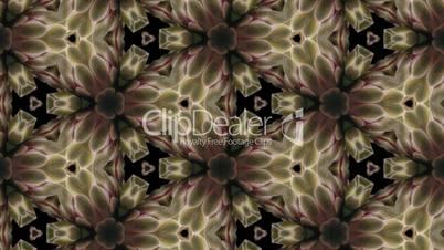 Organic kaleidoscope from blooming white cactus 8b
