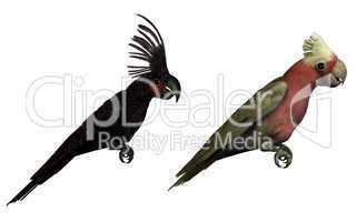 two 3D parrots isolated