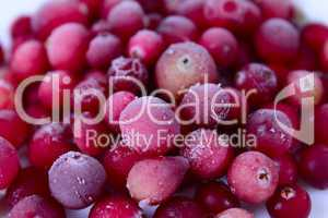 The frozen berries of a cowberry