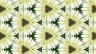Organic kaleidoscope from growing zinnia flower 7c