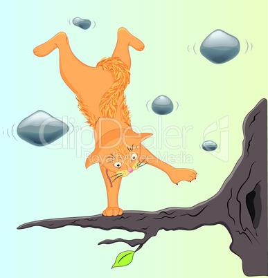 Cat yoga.