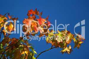 Herbstliche Farben der Blätter