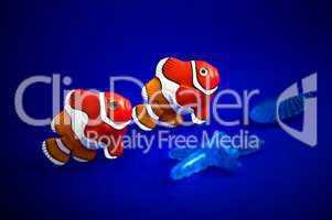 Clownfische nebeneinander im Vordergrund ein Seestern und eine Muschel