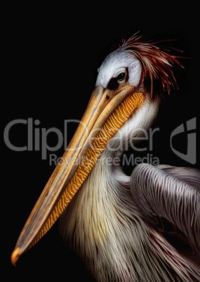 Pelikan Portrait mit Glanz und Lichtreflexen