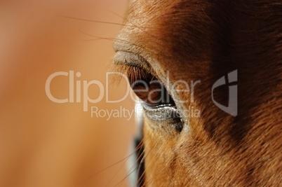 Nahaufnahme des braunen Auges eines Pferdes