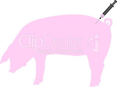 Schwein bekommt Impfung gegen Schweinegrippe