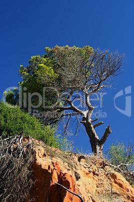 Algarve Bäume 7