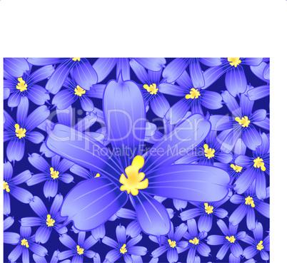 Huge violet