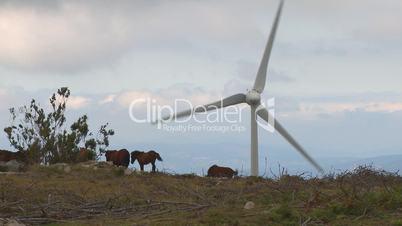 Horses grazing and wind turbine