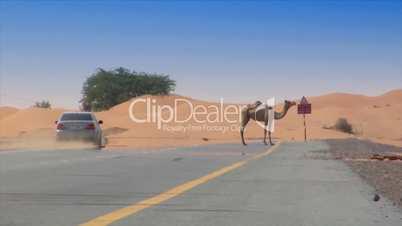 car camel speed pass heat haze