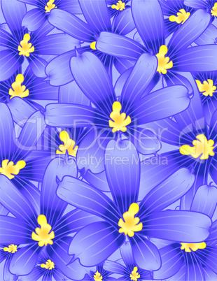 Violets flower garden
