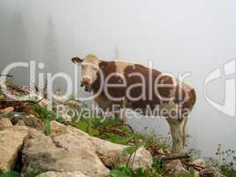 Kuh auf Berg
