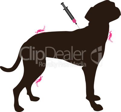 Hund bekommt Impfung gegen Krankheit wegen Mückenstich