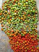 Tomaten, geerntet