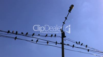 HD Birds on power line on blue sky background