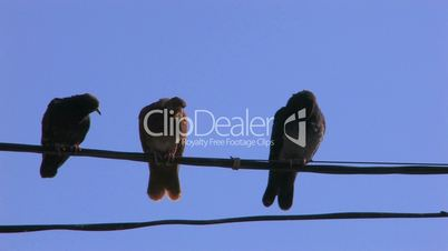 HD Three doves on power line on blue sky background