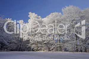 Bäume im Winter mit Rauhreif, Herrenrest, Georgsmarienhuette - Trees with hoarfrost, Georgsmarienhuette, Lower Saxony, Germany, in winter