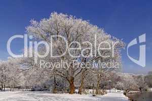 Bäume mit Teichlandschaft im Winter, Bad Laer, Osnabrücker Land, Niedersachsen - Trees with pond landscape in winter, Bad Laer, spa park, Osnabruecker Land, Lower Saxony, Germany, Europe