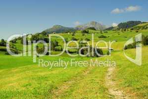 Fiss Alm - Fiss alp pasture 10